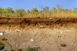 soil_xsec